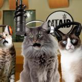 Katie Nicholas (Cat Aid): Care For The Wild