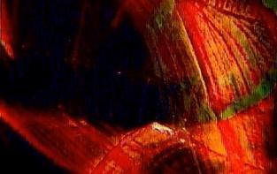 Petr Skala. Od celuloidu k pixelu / B. Kerbachová