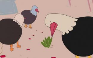 Kde se berou tlustí holubi?