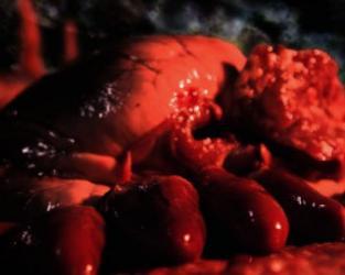 Půlnoční animace: Krev