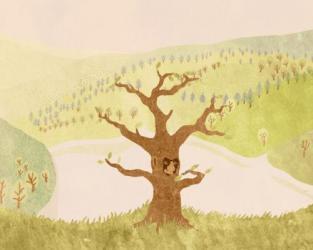 O stromu
